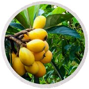 Loquats In The Tree 4 Round Beach Towel
