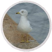 Lost Seagull Round Beach Towel