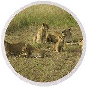 Lotsa Lions Round Beach Towel