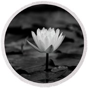 Lotus Blooms Round Beach Towel