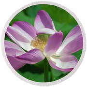 Lotus--center Of Being--protective Covering I Dl0087 Round Beach Towel