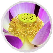 Lotus Central Detailed Round Beach Towel