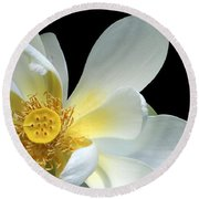 Lotus From Above Round Beach Towel