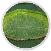 Lotus Leaf In The Marsh Round Beach Towel