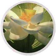 Lotus Light Round Beach Towel