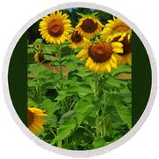 Louisa, Va. Sunflowers 3 Round Beach Towel