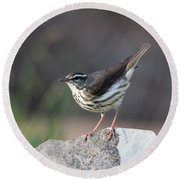 Louisiana Waterthrush Round Beach Towel