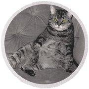 Lounge Cat Round Beach Towel
