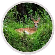 Lounging Fawn Round Beach Towel