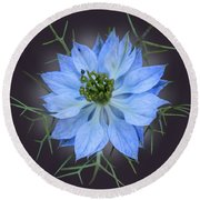 Love In A Mist Black With Light Round Beach Towel