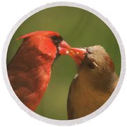Love Is In The Air Cardinals Square Round Beach Towel