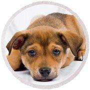 Love Me Puppy Round Beach Towel