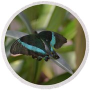 Lovely Blue And Black Emerald Swallowtail Buterfly Round Beach Towel