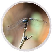 Lovely Dragonfly Round Beach Towel