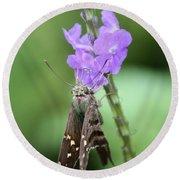 Lovely Moth On Dainty Flower Round Beach Towel