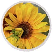 Lovely Sunflowers Round Beach Towel