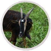 Lovely Up Close Look Into The Face Of A Pygmy Goat Round Beach Towel