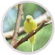 Lovely Yellow Budgie Parakeet In The Wild Round Beach Towel