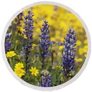 Lupin And Daisies Round Beach Towel