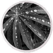 Lupin Leaves With Rain Drops  Round Beach Towel