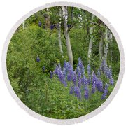 Lupine And Aspens Round Beach Towel