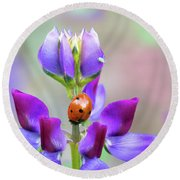 Lupine And Friends Round Beach Towel