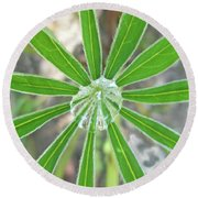 Lupine Leaf And Raindrop Round Beach Towel