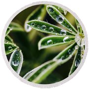 Lupine Leaves Decorated With Dew Drops Round Beach Towel