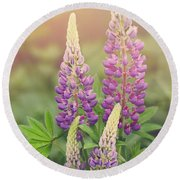 Lupine Sunrise Round Beach Towel