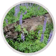 Lupines And Windfall Round Beach Towel
