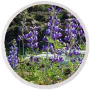 Lupines At The River Round Beach Towel