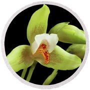 Lycaste Deppei Orchid Round Beach Towel