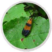 Lycomorpha Moth Round Beach Towel