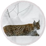 Lynx Hunting In The Snow Round Beach Towel