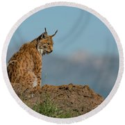 Lynx In Profile On Rock Looking Down Round Beach Towel