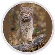 Lynx Kit Round Beach Towel