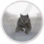 Lynx On The Move Round Beach Towel