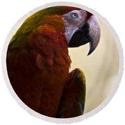 Macaw Round Beach Towel
