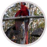 Macaw Guatemala Round Beach Towel