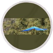 Macaw In Flight Round Beach Towel