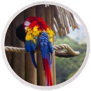Macaw Round Beach Towel
