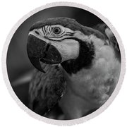 Macaw Portrait In Black And White Round Beach Towel
