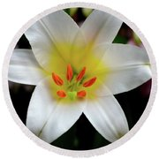 Macro Close Up Of White Lily Flower In Full Blossom Round Beach Towel