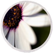 Macro Daisy One Round Beach Towel