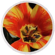 Macro Of A Blooming Striped Yellow And Red Tulip Round Beach Towel