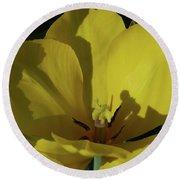 Macro Of A Flowering Yellow Tulip Up Close Round Beach Towel