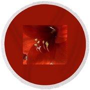 Macro Of Red Amaryllis Flower Round Beach Towel