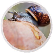 Macro World Round Beach Towel