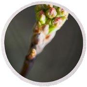 Macro Young Crabapple Tree Blossom Round Beach Towel