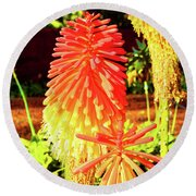 Madeira Funchal  Tritoma, Red Hot Poker, Torch Lily, Poker Plant Round Beach Towel